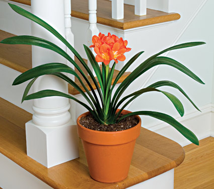 Top 10 plants to improve indoor air quality the green life - Best plants for home ...